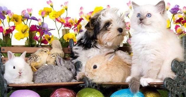 Pâques : les dangers du chocolat pour nos chiens et chats
