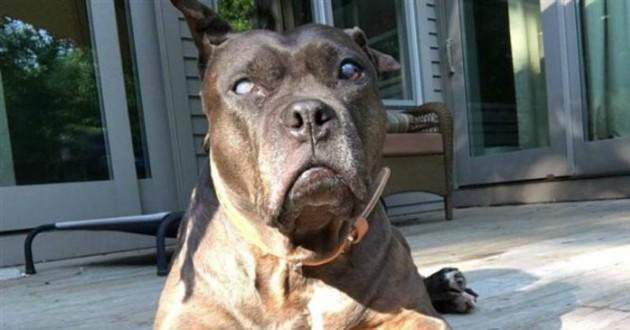 chien lentille