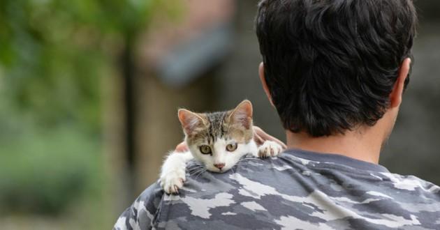 chaton épaule