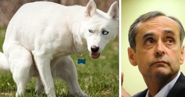 Robert Ménard lutte contre les déjections canines