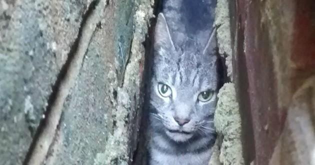chat coincé murs