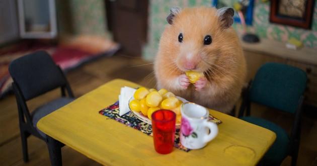 hamster maison mignon