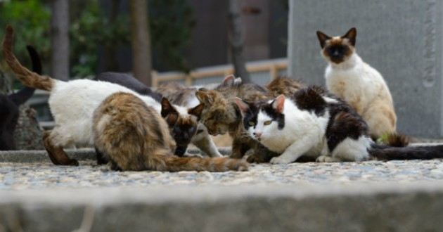chats rue