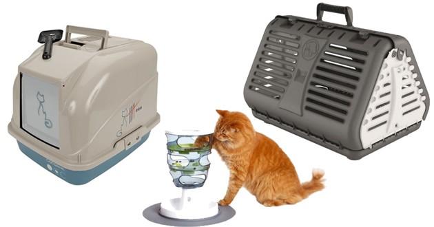 Chat qui joue, une cage de transport et bac à litière