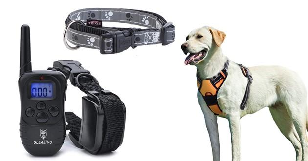 Chien avec un harnais, des colliers pour chien