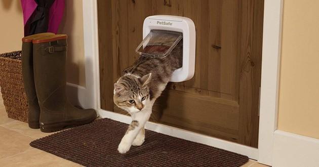 Chat qui passe par une chatière
