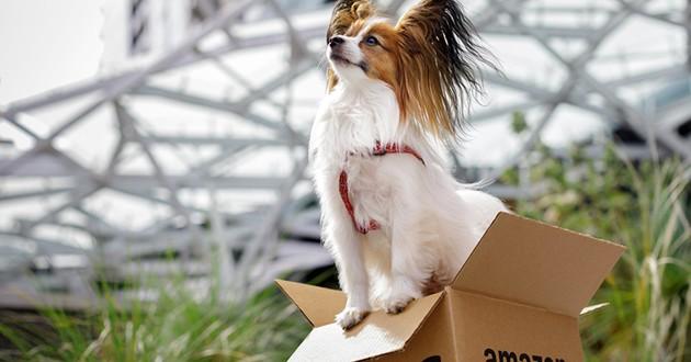 Un chien assis sur un carton