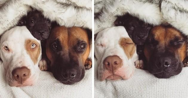 chiens câlinent chiot orphelin