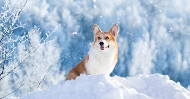 chien dans la neige hiver