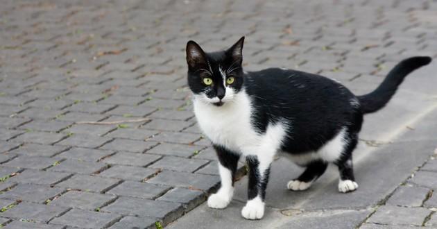 chat noir piege