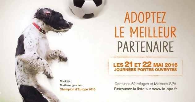 chien à adopter