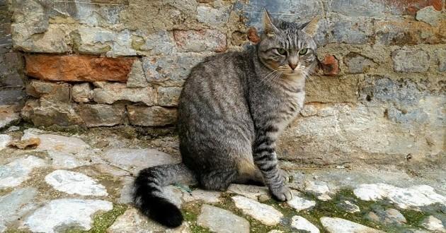 chat retrouvé après 13 ans