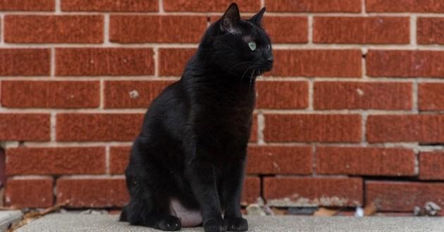chat noir près d'un mur