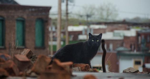 chat près d'un garage