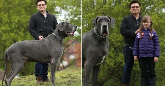 Balthazar l'énorme chien