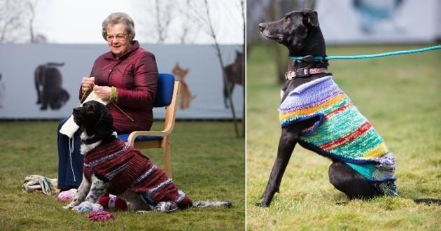 chiens noirs pulls multicolores
