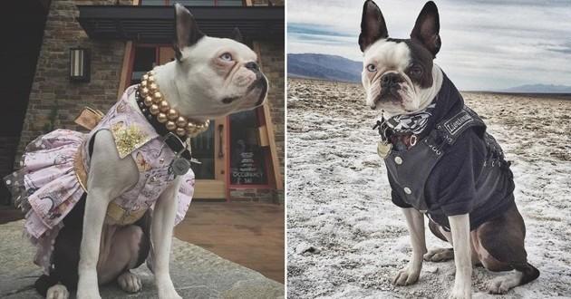 chien déguisé politique du chien unique
