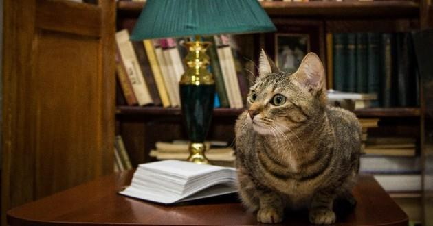 chats intelligents