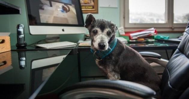 floppy le chien le plus vieux du monde