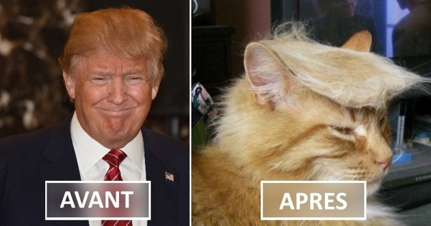 photos Donald Trump chatons