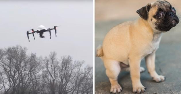 drones crottes de chiens
