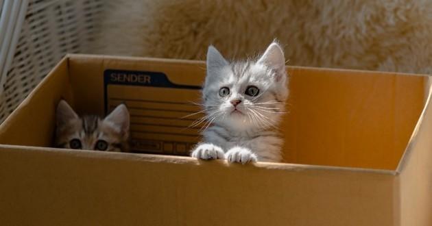 chatons dans un carton vermifuge