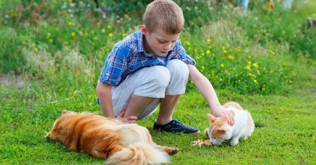 chien et chat avec un garçon