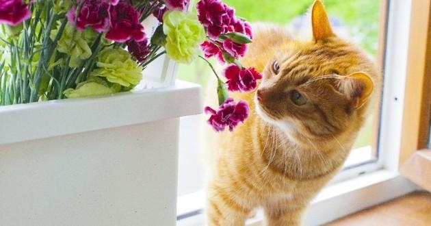 chat qui mange une plante