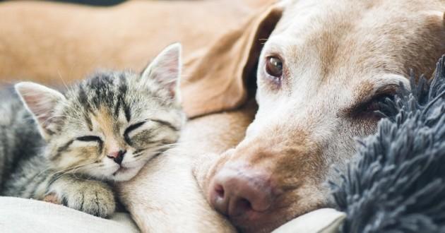 chien avec un chaton