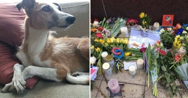 Iggy, le chien tué dans l'attentat de Stockholm