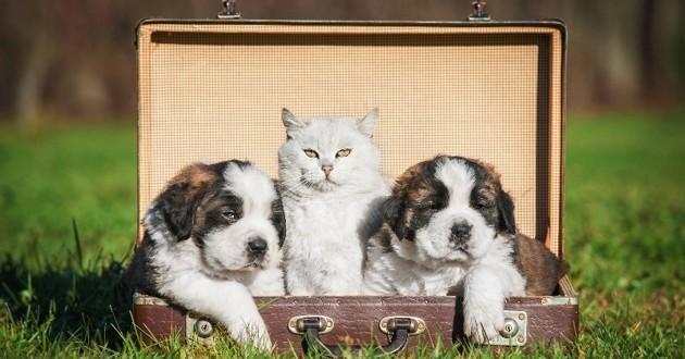 chat et chiens dans une valise