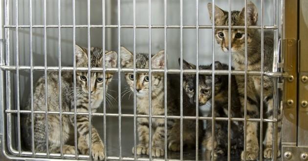 chats dans une cage