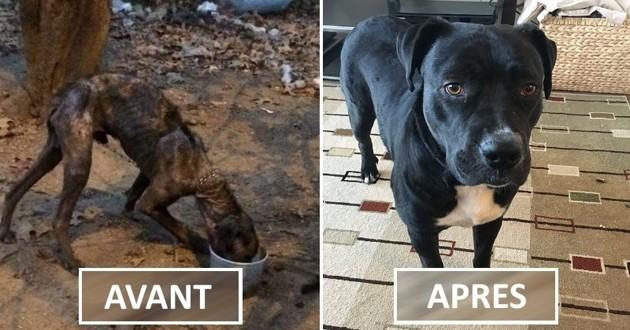 chien métamorphosé par l'adoption