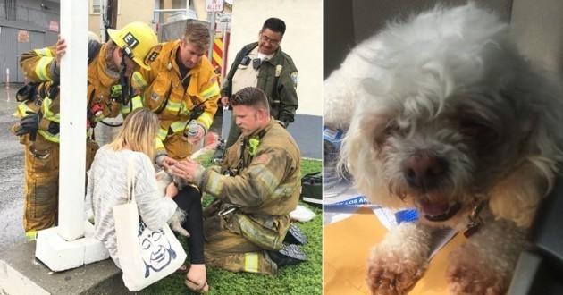 pompiers réaniment un chien