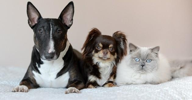 chiens et chat obèses