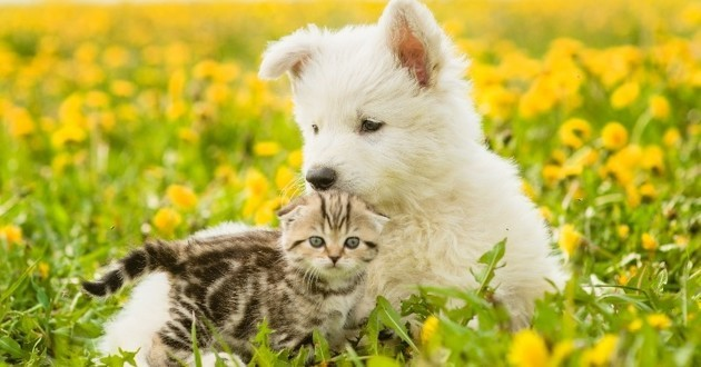 plantes toxiques pour les chats et les chiens