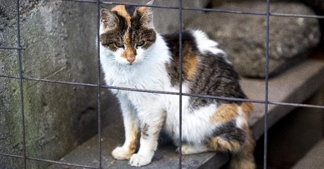 chat dans un refuge