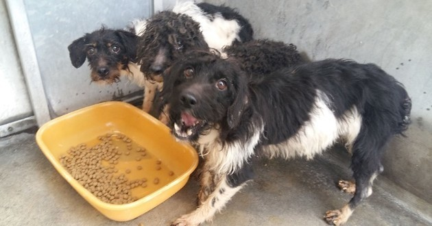 53 chiens sauvés