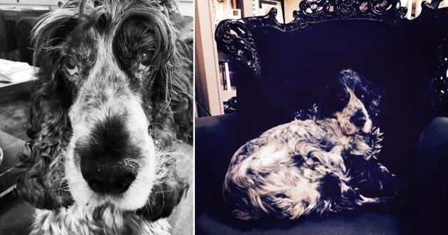 Teuf le chien de Valérie Damidot