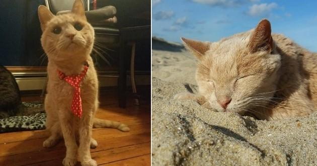 Tigger le chat de 22 ans