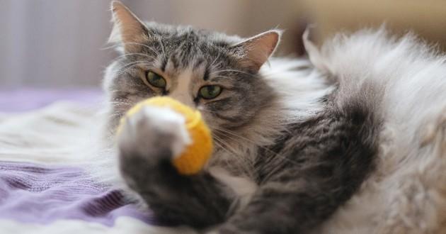 Chat avec une balle