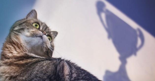 chat qui remporte un concours