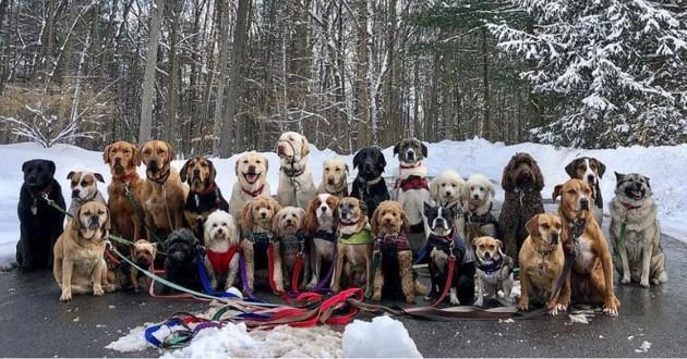 28 chiens en balade hivernale