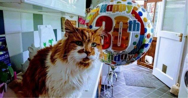 un chat maine coon fête ses 30 ans