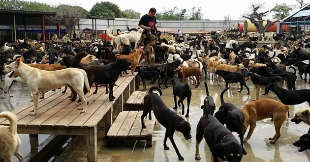 3000 chiens de refuge