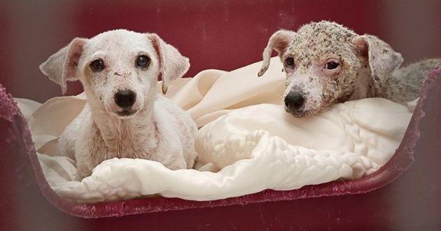 chien sauvé par la fondation 30 Millions d'amis