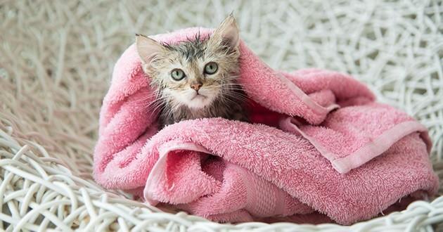 hygiène du chat, comment entretenir son chat