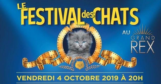 festival des chats