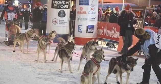 Grande Odyssée Savoie Mont Blanc 2017 chiens de traîneau