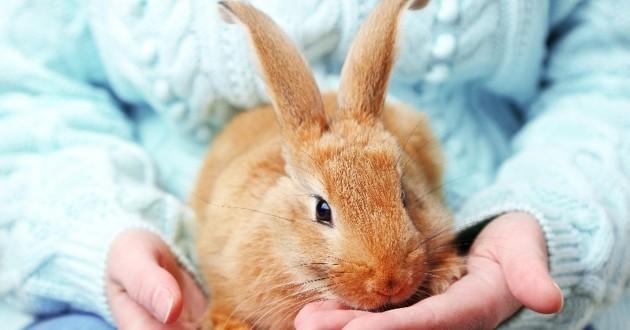 réussir l'adoption de son lapin